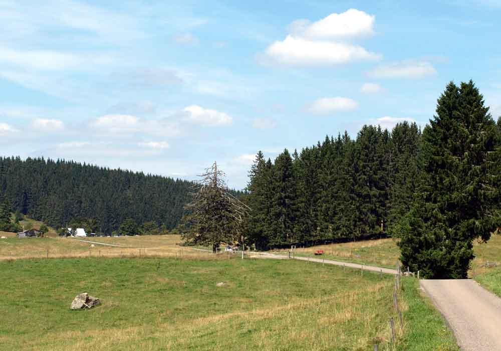 bilder von lenzkirch kappel saig raitenbuch windgf llweiher im schwarzwald. Black Bedroom Furniture Sets. Home Design Ideas